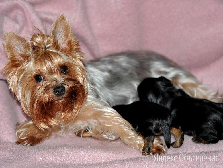 собаки по цене 15000₽ - Собаки, фото 0