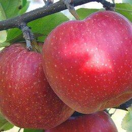 Разнорабочие - Разнорабочие на  сбор яблок с  проживанием, 0