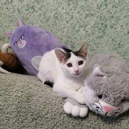 Кошки - Гаврюша - кошечка с пацанским характером в добрые руки!, 0