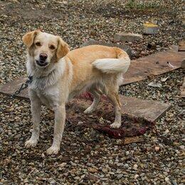 Собаки - Собака Ива из приюта, 0