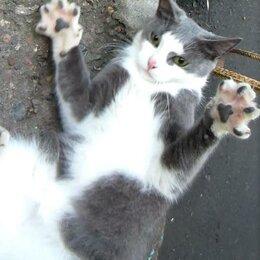 Кошки - Котёнок зеленоглазая ЛисаАлиса)), 0