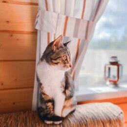 Животные - Кошечка Бони ищет дом, 0