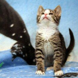 Кошки - Котенок ищет любящий дом!, 0