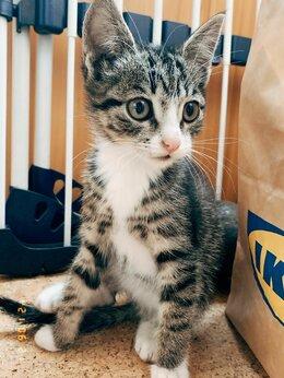 Кошки - Отдам котят, 0