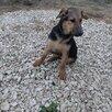 Щенок с идеальным характером по цене даром - Собаки, фото 1