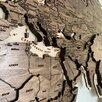 Деревянная карта мира с гравировкой стран, столиц и гидрографии рек по цене 19500₽ - Картины, постеры, гобелены, панно, фото 1