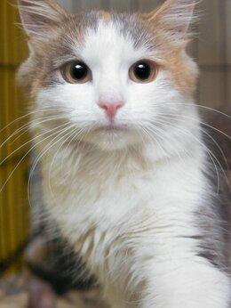 Кошки - Котёнок-няшка 😽, очень ласковая Николле, 0