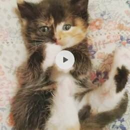 Кошки - Маленькая и забавная Ксюня ищет любящую семью, 0