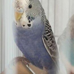 Птицы - Птенец получех, 0