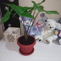 Комнатные растения - Растения , 0