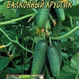 Семена - Огурец  Балконный хрустик  0,3 гр / Цв.Сад, 0