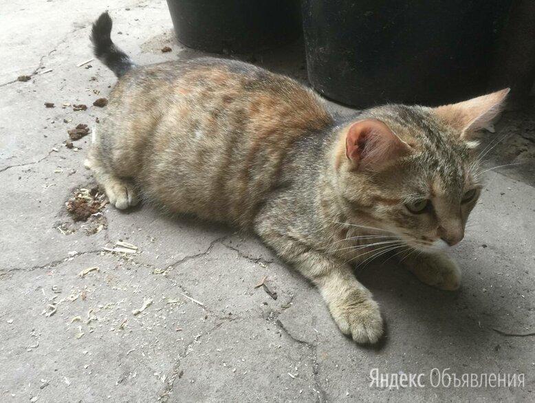 Мама-кошка и шесть котят 1 месяц по цене даром - Животные, фото 0
