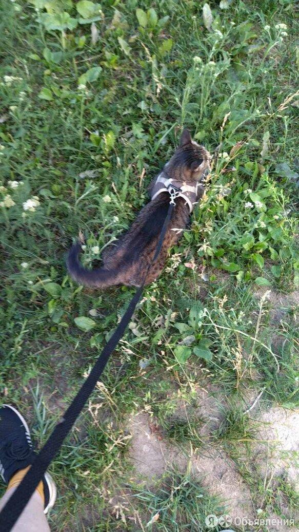 Кошка по цене не указана - Животные, фото 0