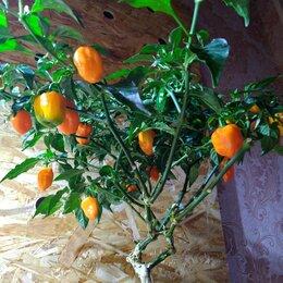 Семена - Перец Хабанеро оранж, 0