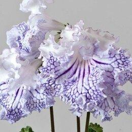 Комнатные растения - Стрептокарпусы - наборы фр. листочков и семян, 0