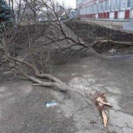 Бытовые услуги - Спил деревьев.Удаление пня.Вывоз Мусора и веток.Армавир, 0