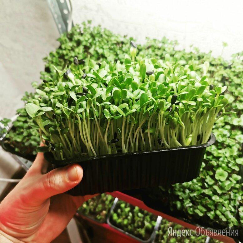 Микрозелень - СуперФуд 2021 по цене 120₽ - Продукты, фото 0