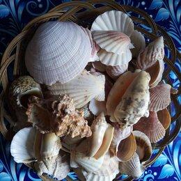 Декорации для аквариумов и террариумов - Коллекционные ракушки и раковины, 0