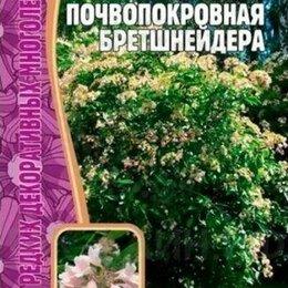 Рассада, саженцы, кустарники, деревья - Гортензия Почвопокровная Бретшнейдера 20 шт., 0