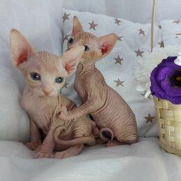 Кошки - Канадский сфинкс котята в новую семью, 0