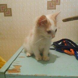 Животные - Котёнок, 0