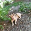 В очень добрые руки  по цене даром - Собаки, фото 2