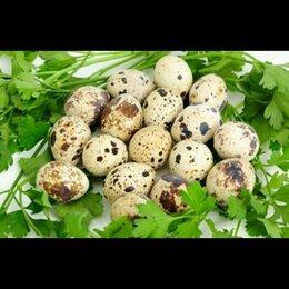 Продукты - Яйцо перепелиные , 0
