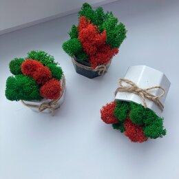 Комнатные растения - Стабилизированный мох в кашпо /декор для дома и офиса, 0