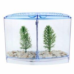 Растения для аквариумов и террариумов - Аквариум настольный двухсекционный, с грунтом и 2 растениями, 0