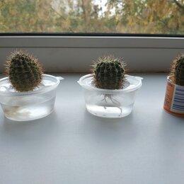 Комнатные растения - Маленькие кактусы, 0