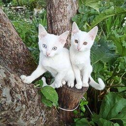 Кошки - Белоснежные котята-девочки, 0