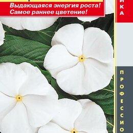 Приборы и аксессуары - Катарантус розовый (Барвинок) Пацифик Вайт ПЛ, 0