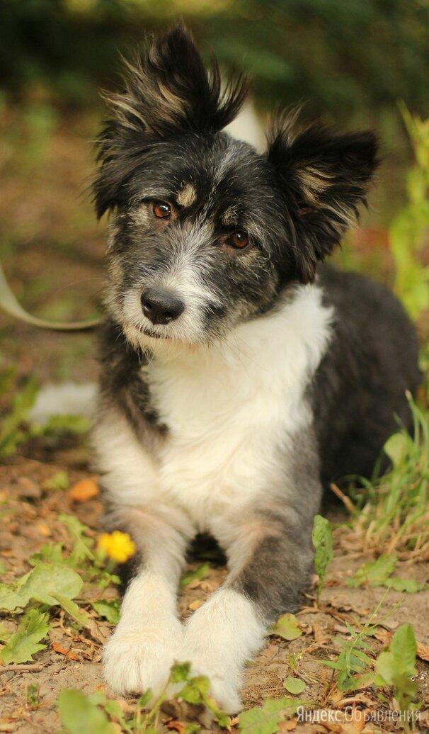 Терьеристая девочка по цене даром - Собаки, фото 0