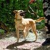 Собака Арни по цене даром - Собаки, фото 2