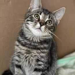 Кошки - Ручная ласковая девочка Линда 4,5 мес ищет дом, 0