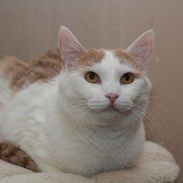 Кошки - Юта в поиске дома, 0