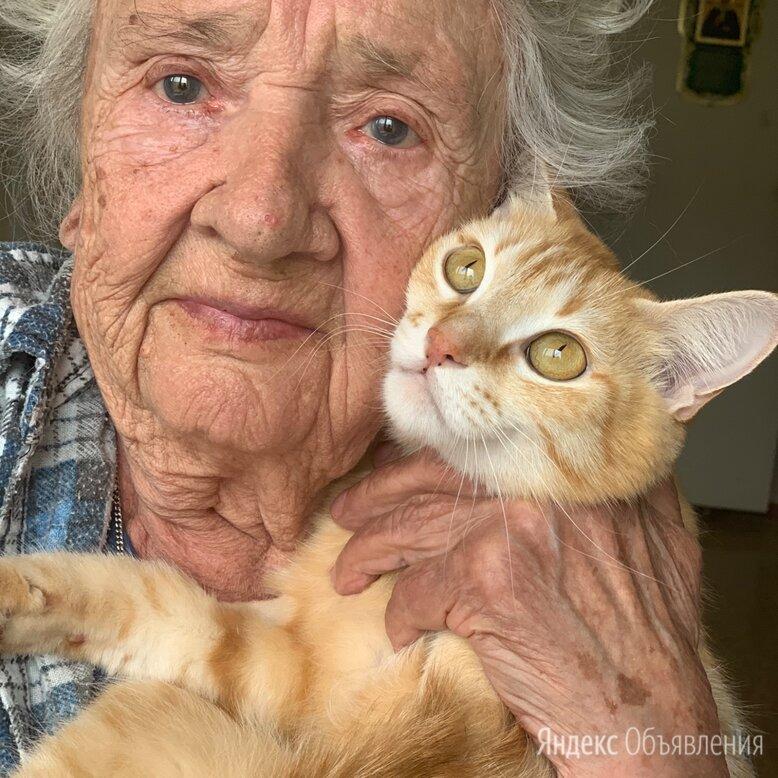 Молодая кошка 2 года в добрые руки бесплатно  по цене даром - Кошки, фото 0