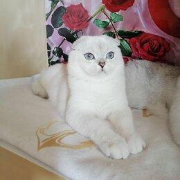 Кошки - Котик в любимцы, 0