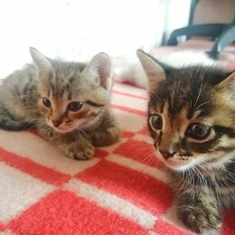 Кошки - Котята в хорошие руки, 0