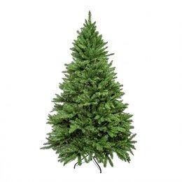 Ёлки живые - Ель Royal Christmas Washington Promo 98210 (210 см, 0