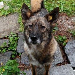 Животные - Собака, умный молодой мальчик, ищет дом и доброго, заботливого хозяина., 0