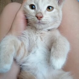 Животные - Кот , 0