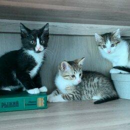Кошки - Котята Красногорск-Нахабино, 0