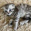 Кошки по цене 2000₽ - Кошки, фото 8