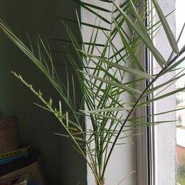 Комнатные растения - комнатные растения -Пальмы, каланхое, паперомии, денежное дерево., 0