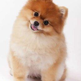 Услуги для животных - Уход и выгул  собак, 0