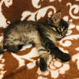 Кошки - Котята , 0