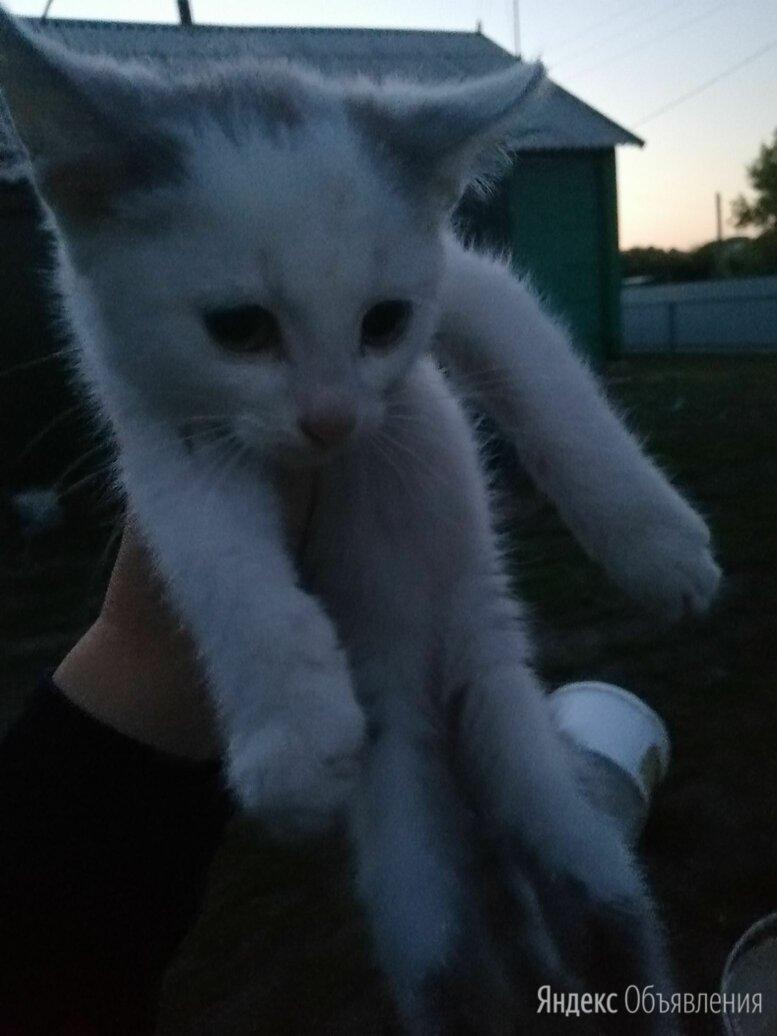 Котята в добрые руки  по цене не указана - Кошки, фото 0
