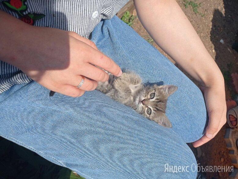 Кошки в добрые руки по цене даром - Кошки, фото 0