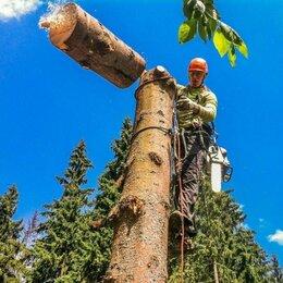 Бытовые услуги - Спил деревьев в Ивановской области, 0
